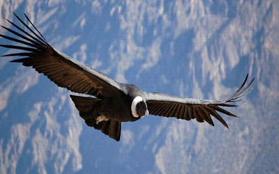 Flight of the Condor Cusco Apurimac Canyon Full Day